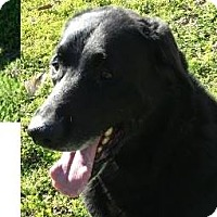 Adopt A Pet :: TANK: Low Fees Senior - Red Bluff, CA