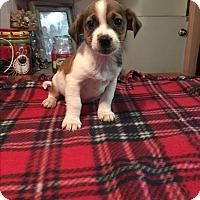 Adopt A Pet :: Dawson - Kittery, ME