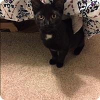 Adopt A Pet :: Paddington - Albany, NY
