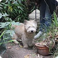 Adopt A Pet :: Sandy - San Francisco, CA