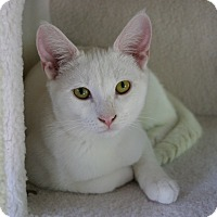 Adopt A Pet :: Frosty - Sherman Oaks, CA