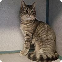 Adopt A Pet :: Katherine - Kinston, NC