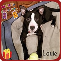 Adopt A Pet :: Louie - Genoa City, WI