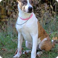 Adopt A Pet :: Mattie - Waldorf, MD