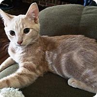 Adopt A Pet :: Simba - Lebanon, PA