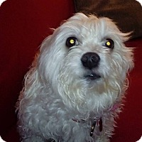Adopt A Pet :: Cassie - Sharon Center, OH