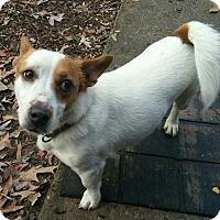 Adopt A Pet :: Milo - Harrisonburg, VA