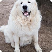 Adopt A Pet :: KOTA - Granite Bay, CA