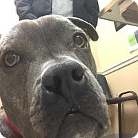 Adopt A Pet :: Greta - Newfield, NJ