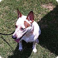 Adopt A Pet :: Kenzie - Conway, AR