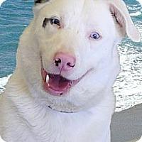 Adopt A Pet :: A fully trained dog waiting fo - Sacramento, CA