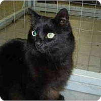 Adopt A Pet :: Clyde - Mission, BC