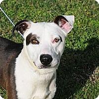 Adopt A Pet :: Donny - Albany, NY