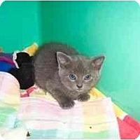 Adopt A Pet :: Jack - Secaucus, NJ