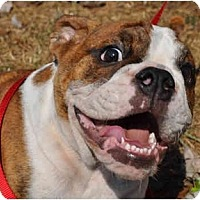 Adopt A Pet :: Winston - Winder, GA