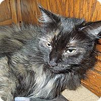 Adopt A Pet :: Daisy - Medina, OH