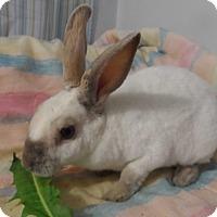 Adopt A Pet :: Serendipity - Hillside, NJ