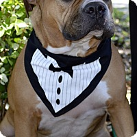 Adopt A Pet :: Hulk - Hialeah, FL