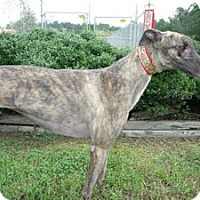 Adopt A Pet :: Conniewiz Walker - Knoxville, TN
