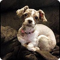 Adopt A Pet :: Zoey - Albemarle, NC
