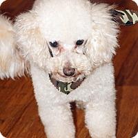 Adopt A Pet :: Howie - Atlanta, GA