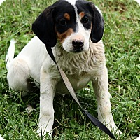 Adopt A Pet :: Zoey - Spring Valley, NY