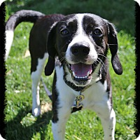 Adopt A Pet :: Boone - Shippenville, PA