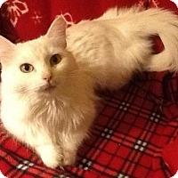 Adopt A Pet :: Adele - San Antonio, TX