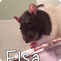 Adopt A Pet :: Thelma, Elsa, Louis & Nash - Aurora, IL