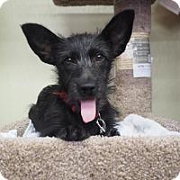 Adopt A Pet :: Fudge - Corona, CA
