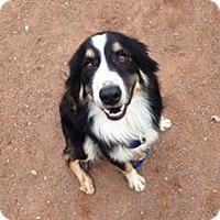 Adopt A Pet :: Rae - Aurora, CO