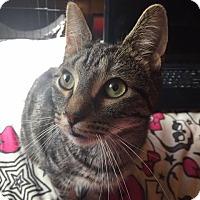 Adopt A Pet :: Boden - Davison, MI