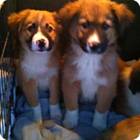 Adopt A Pet :: A Puppies - Cincinnati, OH