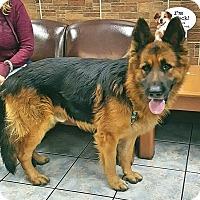 Adopt A Pet :: Blacky - Mocksville, NC
