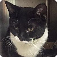 Adopt A Pet :: Meryl - Manchester, NH