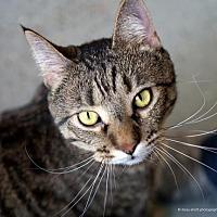Adopt A Pet :: Herbie - Tucson, AZ