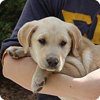 Adopt A Pet :: Milo - Auburn, MA
