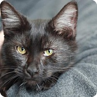 Adopt A Pet :: Hope - Cookeville, TN
