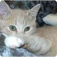 Adopt A Pet :: Prentice - Arlington, VA