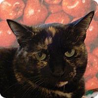 Adopt A Pet :: SweetPea - Albany, NY