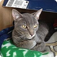 Adopt A Pet :: Grady - Island Park, NY