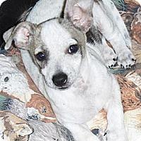 Adopt A Pet :: Mesquite - Phoenix, AZ