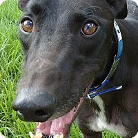 Adopt A Pet :: Boc's Titan - Longwood, FL