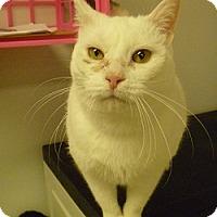 Adopt A Pet :: Frosty - Hamburg, NY