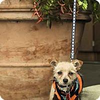 Adopt A Pet :: Jerome - Los Angeles, CA