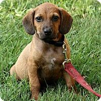 Adopt A Pet :: Noah - Brattleboro, VT