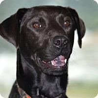 Adopt A Pet :: Ellie - ROME, NY