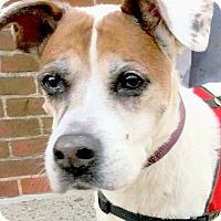 Adopt A Pet :: Daisy - Philadelphia, PA