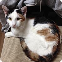 Adopt A Pet :: ELSIE - Olivehurst, CA