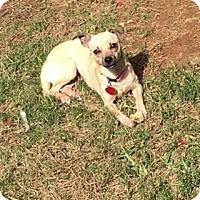 Adopt A Pet :: Tink - San Antonio, TX